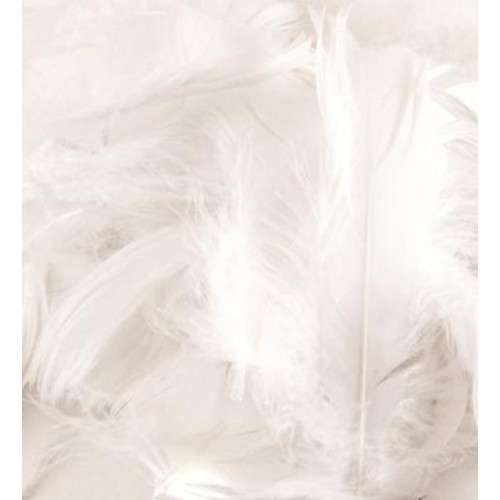 50G Bag White Feathers