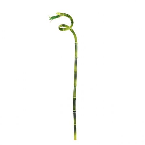 Lucky Bamboo 61Cm