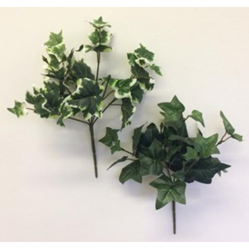 Ivy Bush