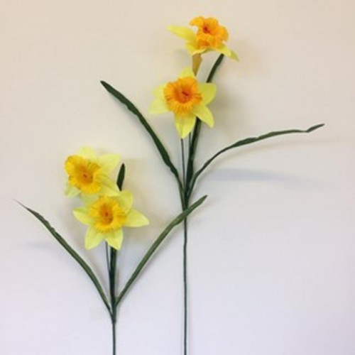 Single Daffodil Stem