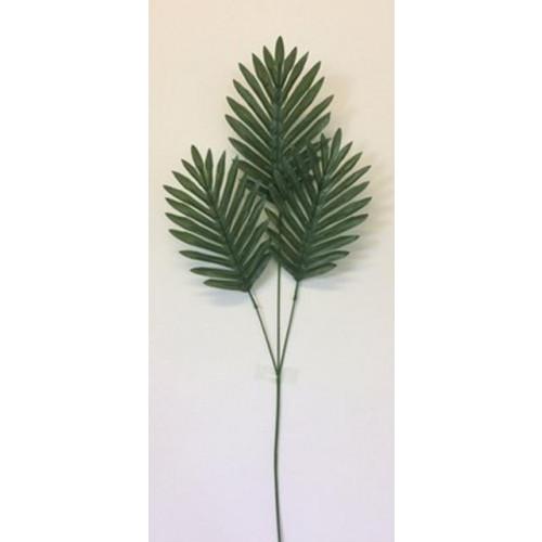Single Cycas Leaf
